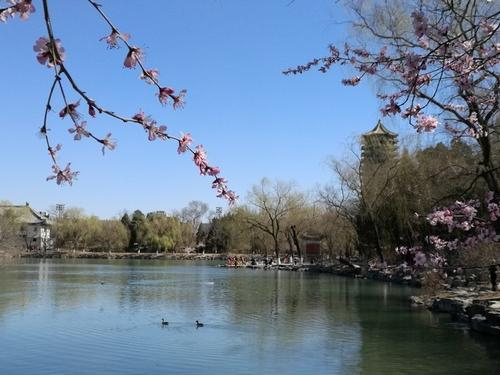 春日胜景,美丽北大